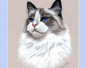 Ragdoll Cat Print Royal by Irina Garmashova