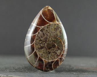 Tear drop Ammonite Cabochon, Madagascar fossil, Jewelry making supplies B6755