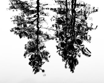 Tree reflection in Oregon. 8x10 print by Ryan Muirhead. Unsigned.