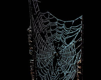 Tiny Web Fine Art Photograph Spider Web with Dew