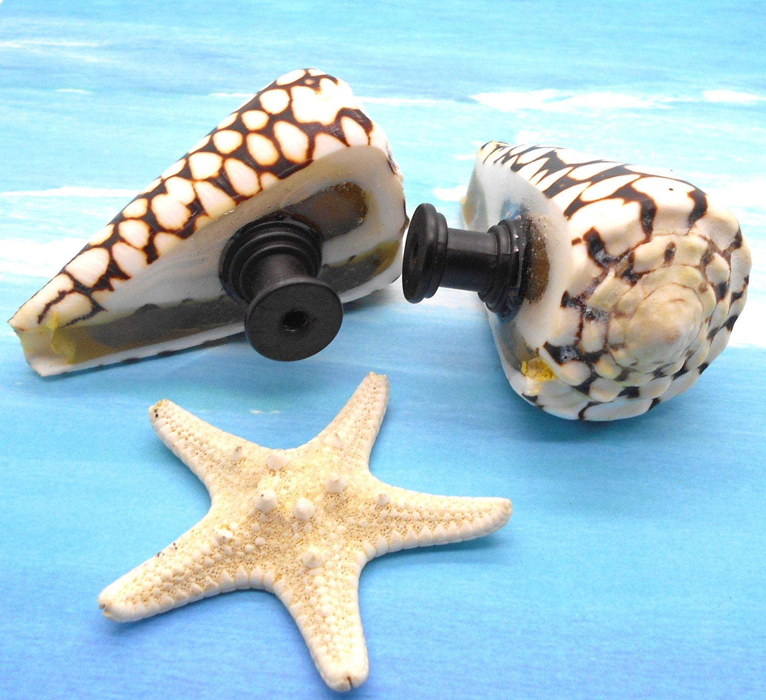 Knobs Sea Shell Knobs Cabinet Knobs Cone Shell Knobs