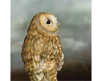 Tawny Owl 8x10 signed fine art print. Bird lover gift.
