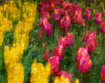 Abstract Spring Bloom Image, Flower Photography, Tulip Photos, Tulip Fields