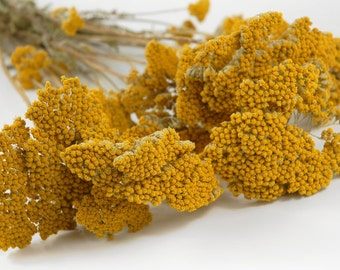 WHOLESALE 7 x Dried Yarrow 20 - 25 Stems - All Colors