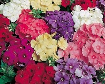 PBPHD)~BEAUTY DWARF Phlox~Seeds!!!!~~~Fabulous Mix of Color!