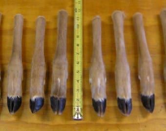 10 Preserved Straight Deer Legs
