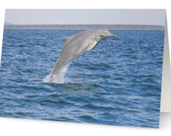 Dolphin Greeting Card; Greeting Card; Birthday Card; Christmas Card; Blank Card