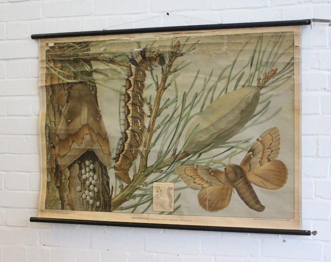 Moths German Educational Chart Circa 1930's
