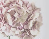 Photography Print - Pink hydrangea flower -  shabby chic - fine art for your home