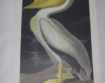 Audubon print unframed bird American White Pelican reproduction