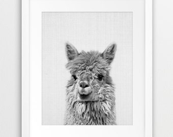 Alpaca Print, Nursery Wall Art, Black White Photography, Alpaca Wall Decor, Grey, Nursery Animal Decor, Llama Print, Kids Room Printable Art