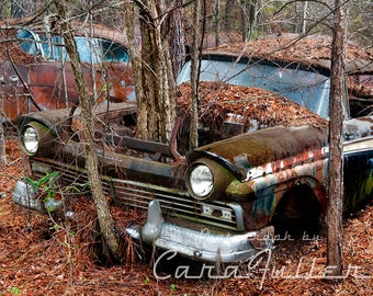 1957 Ford with Trees growing where the Motor was Photograph