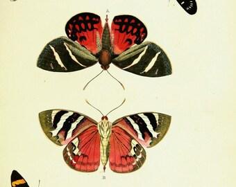 Butterflies and moths exotic prints 1867 192 printable prints