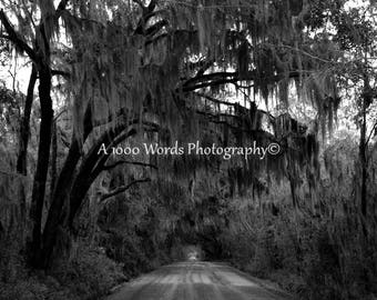 Savannah Georgia Photography - Savannah GA - Nature Print - Nature Art - Wall Decor