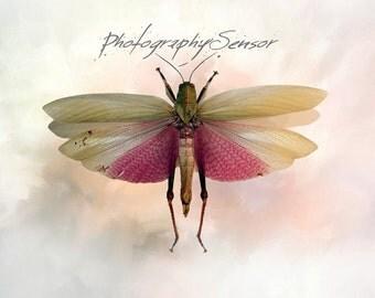 Picture of Pink Butterfly, Nursery Photo, Nursery, Fine Art Print, Nursery Print, Baby Pink Colors, Sweet and Happy Atmosphere