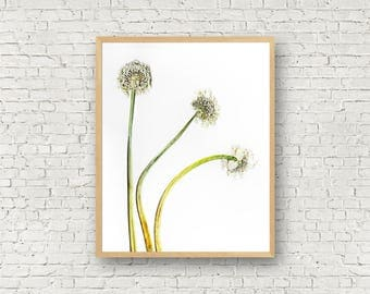 Shallot Flowers, Pressed Plant Print, Realistic Botanical Print, Edible Plant Poster, Culinary Herbs Print, Nature Cottage Decor, Onion Art