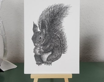 Red Squirrel Art Print of Pen and Ink illustration; British Wildlife series