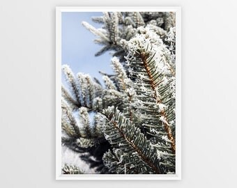 Pine Tree Print Instant Download Winter Photography Holiday Gift Frozen Pine Tree Frost Photography Snow Print Winter Home Decor Winter Tree