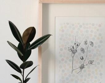 Fine Art Print -- The Cotton Bud