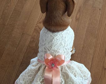 Ivory lace Dog Dress, Dog wedding Dress, ivory salmon bridal Dog Dress