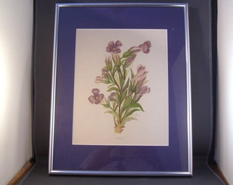 Framed Chromolithograph Rocky Mountain Wildflowers