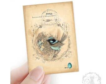 Blue Wren, birds nest, Aceo, Artist trading card, woodland, nature, collectible art print, Giclee