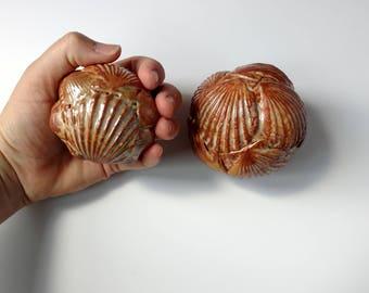 Decorative shell Rattles, shaker, Set of 2  bowl filler rattles, ceramic nature sculpture, beach decor. Contemporary seashell art.