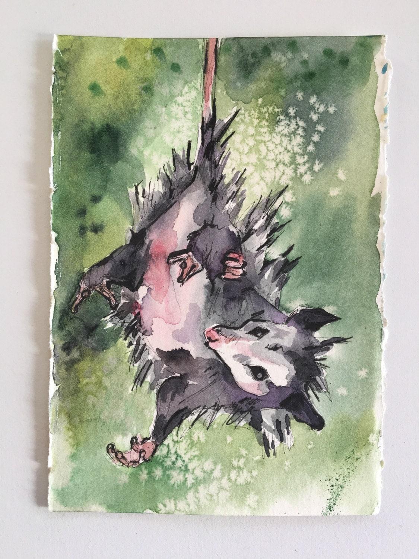 Upside Down Art Possum Painting Watercolor Art Of A Possum Hanging Upside