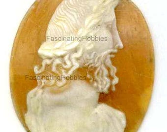 Vintage -SHELL CAMEO -MAN Profile, Beard,very well Handcarved, chiselled, Rare, Victorian, genuine, to frame or settle in a brooch,pendant