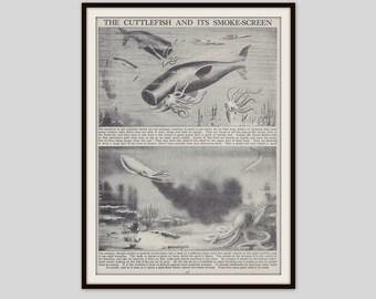 Cuttlefish Print, Marine Animals, Molluscs, Marine Life, Marine Biology, Original Vintage Print, Black and White, Wall Art, Home Decor