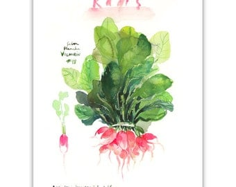 Pink radish print, Watercolor vegetable print, Kitchen art, Food print, 8X10 art print, Botanical poster, Home decor, Vegetable painting