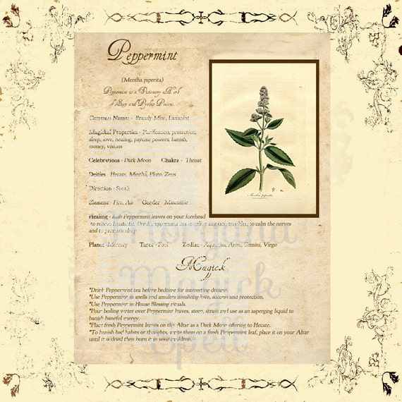 PEPPERMINT MAGICK HERB  Digital Download, Book of Shadows Grimoire, Scrapbook, Spells, White Magick, Wicca, Witchcraft, Herb Magic
