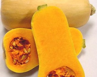 VSQWB)~BUTTERNUT SQUASH~Seeds!!!~~Rich & Sweet Heirloom!