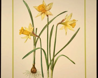 Daffodil Print Yellow Flower Print Nature Wall Art Daffodils