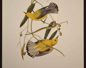 Bird Print Nature Wall Art Swamp Warbler Original Audubon