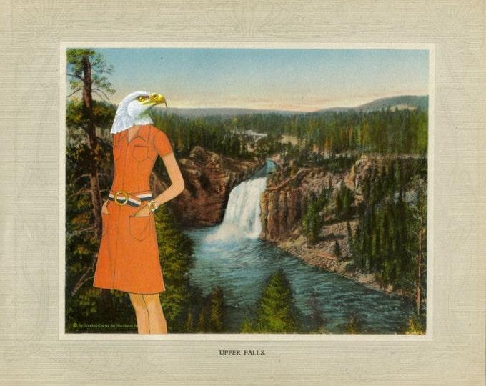 Bald Eagle Art, National Park Artwork