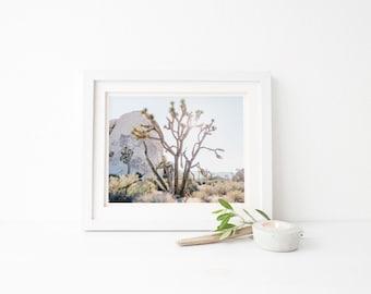 joshua tree photograph, joshua tree fine art print, joshua tree photo, joshua tree fine art photography, desert print, california print