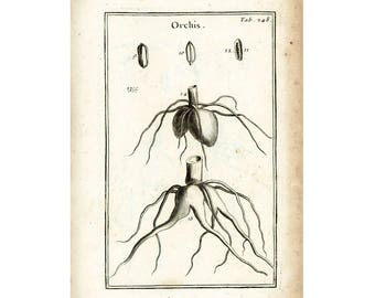 1797 Roots Rhizome Orchid Antique Botanical Lithograph Natural History Wall Art Home Decor