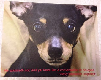 Handsome Min Pin Dog Notecard - Profits Donated to Sunny Sky's Animal Rescue