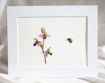 Bee Orchid and Bee Print from Original Watercolour