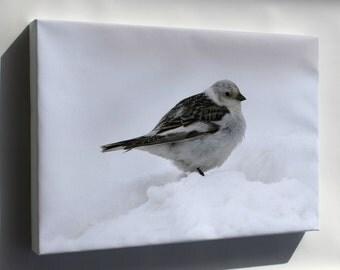 Canvas 24x36; Snow Bunting Bird