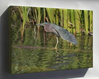 Canvas 16x24; Green Heron North Pond Chicago