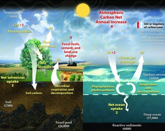 16x24 Poster; Earth'S Annual Carbon Cycle