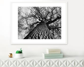 Tree photograph - Tree Portrait No.132, Black and white tree photography, Tree Wall Art, Rural landscape