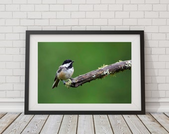 Chickadee Photography - Bird Photo - Nature Prints - Nature Photography - Chickadee Wall Art - Chickadee Photograph - Small Bird Photo