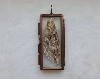 Stained Glass Locket with Real Moth Wing- Cruelty Free