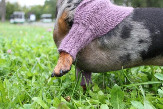 Knitting Pattern, Mini Dachshund, Dog, Shrug, Sweater ...