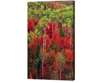 Idaho Autumn Stretched Canvas Print, Modern Wall Art Featuring Fine Art Nature Photography, Autumn Foliage, For Any Home Or Office Decor