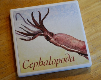Ceramic Coaster, Cephalopoda/Squid