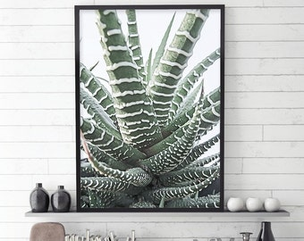 Zebra Succulent, Succulents, Succulent Photograph, Botanical Print, Botanical Photography, Botanical Art, Nature Photography, Scandi Print